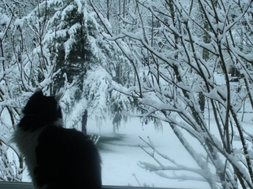 Fiona Checking out the White Stuff!