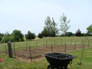Vegetable Garden Space 2011